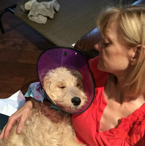 Arizona Goldendoodles Policies
